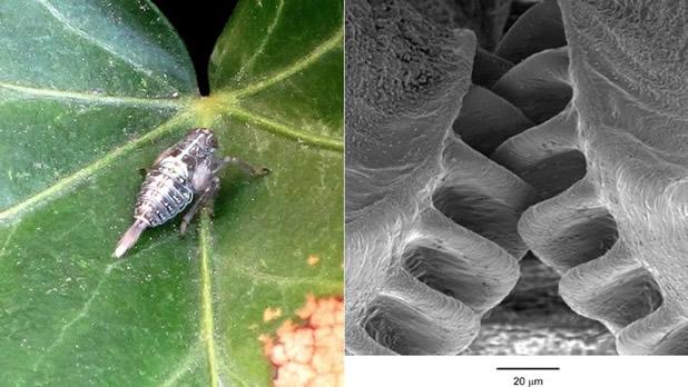 Descubren un insecto con engranajes