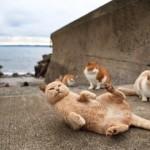La isla de los gatos en Japon