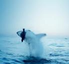 Tiburon cazado al vuelo
