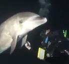 Delfín en apuros pide ayuda a unos buzos