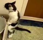 ¿Desde cuando los gatos mean de pie?